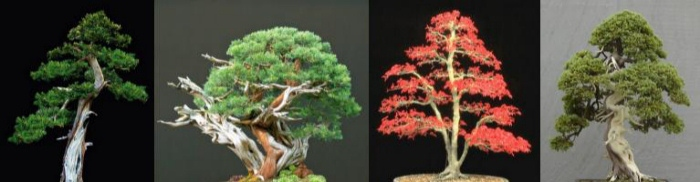 4 Bäume für ein Hallelujah