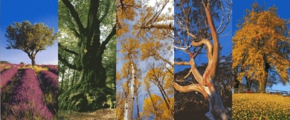 diebäume